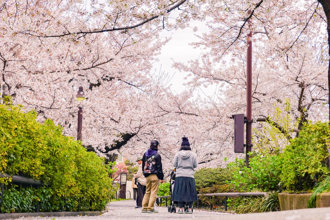 Expats in NYC enjoying the Cherry Blossom Festival in Brooklyn